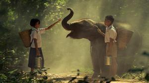 'Animalia Indica' review: Rikki Tikki Tavi and friends
