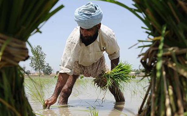 Farmers' not to be hurt by govt. move to cut crop cover premium: Bhutani