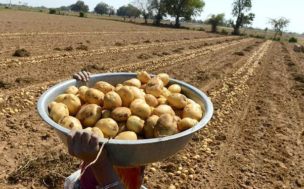 Potato farmers cry foul as PepsiCo sues them
