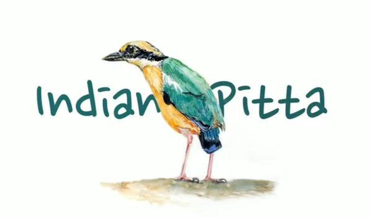 Tanishka's illusration of Indian Pitta