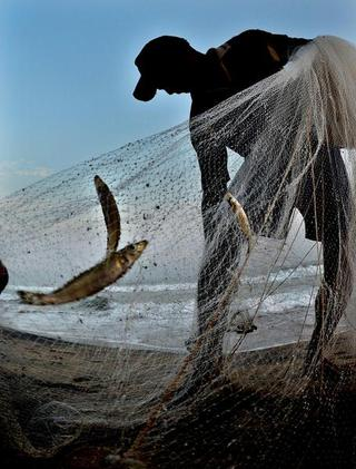 Time to give local fish varieties a shot! - The Hindu