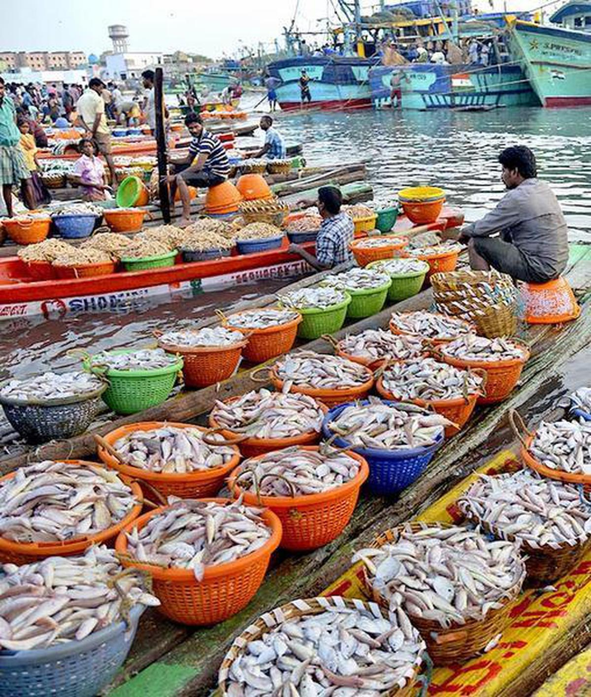 Know when to eat your fish - The Hindu