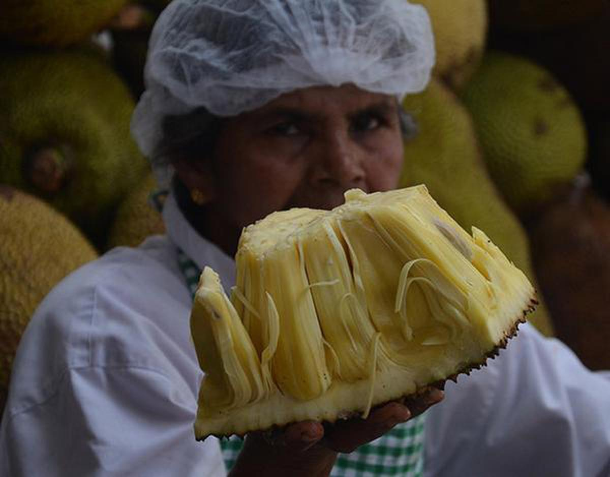 The jackfruit's journey to becoming Kerala's official fruit