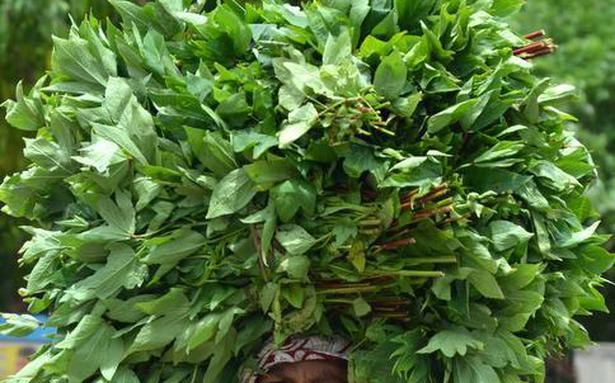 Going gongura: How to make the tangy leaves last longer