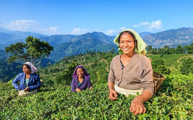 Dorje re-introduces Darjeeling tea to the Indian market with flavours for every season