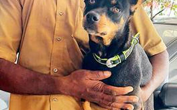 Meet the auto driver from Chennai whose passengers include dogs, birds and the occasional calf