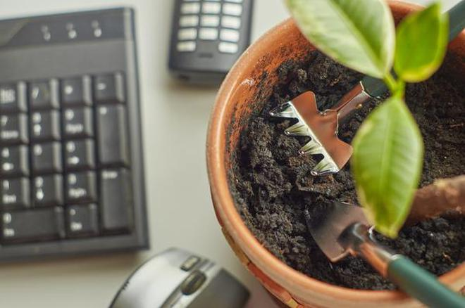 Care For Office Plants Small Rake And Spade In The Flower Pot Work Place