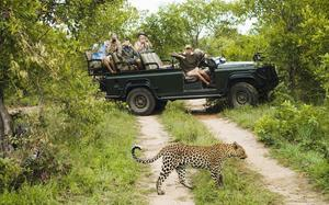 A ride through South Africa's Kruger National Park