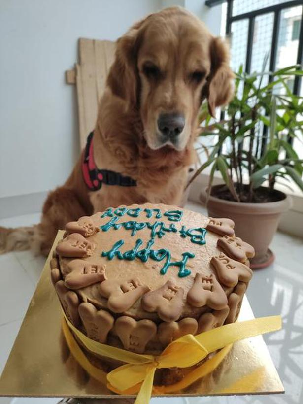 Incredible Now Pet Birthdays Go One Level Higher With Various Options The Funny Birthday Cards Online Overcheapnameinfo