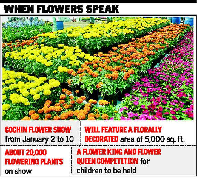 cochin flower show from saturday - the hindu