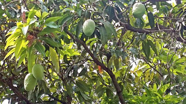 Green Mango Travel Agency
