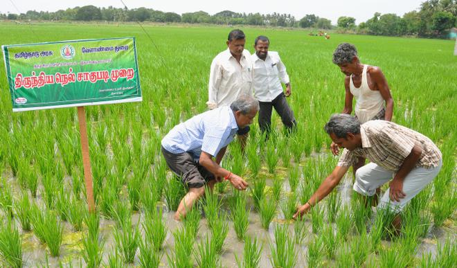 water saving rice production systems - 636×373