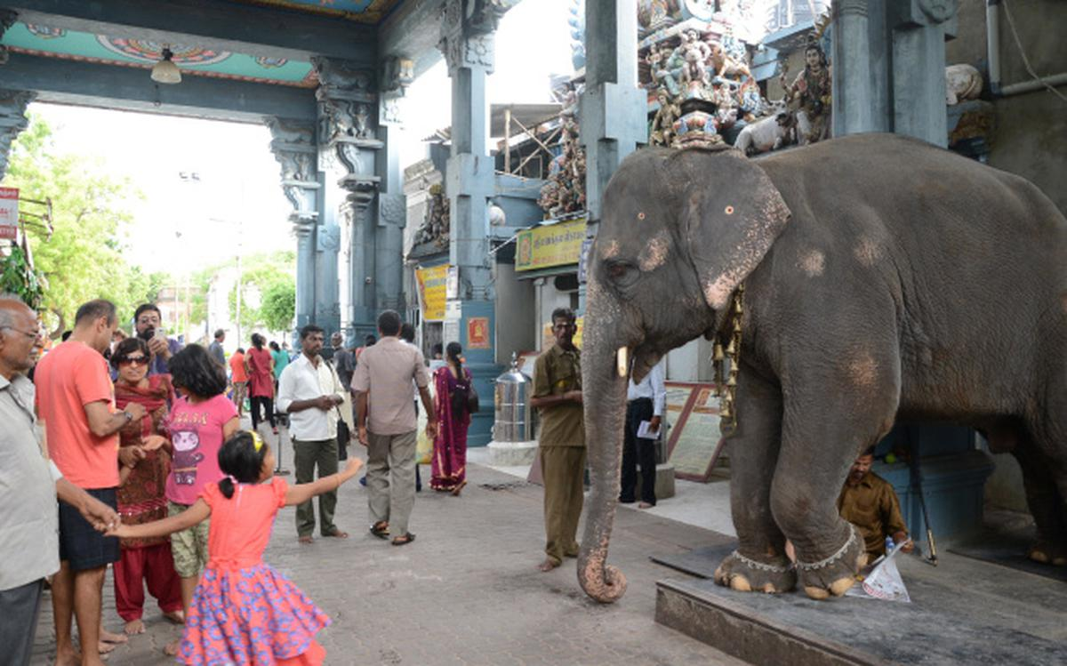 Manakula Vinayagar Temple warned on elephant issue - The Hindu