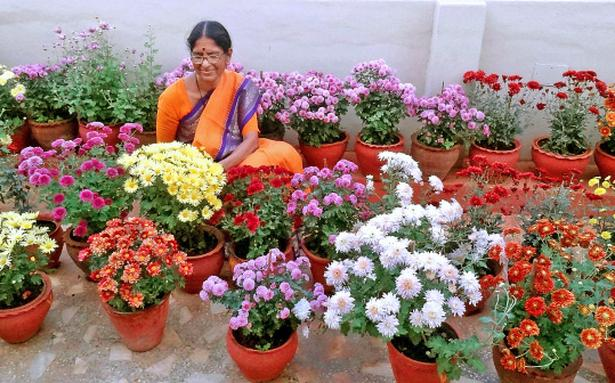 Roof Garden Plants | A Multi Colour Rooftop Garden The Hindu