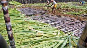 ECI stalls Karnataka farm loan waiver scheme till the end of election process