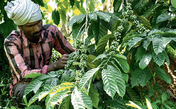 Uncertainties Put Wayanad Coffee Farmers In A Fix  The Hindu. Christian Quotes Rick Warren. Quotes Happy Hump Day. Quotes About Moving On After Retirement'. Deep Quotes About Emptiness. God Made You Quotes. Happy Quotes On Pinterest. Vamping Instagram Quotes. Motivational Quotes Quotes Life