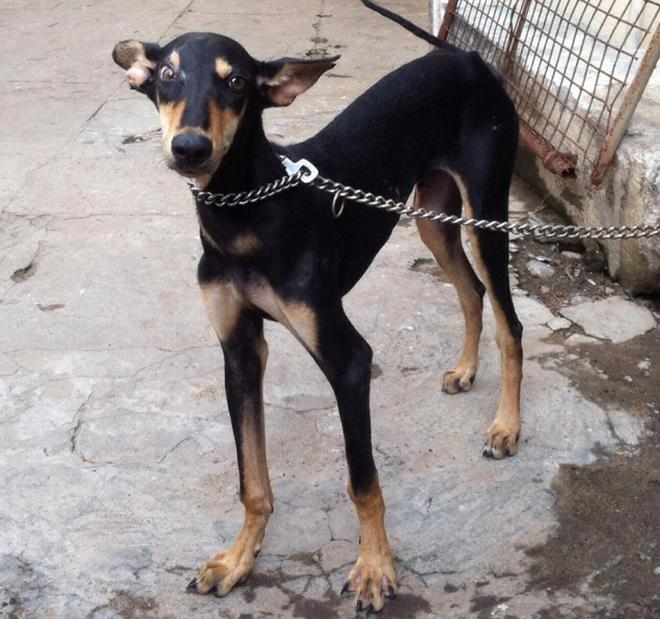 Https Www Thehindu Com News Cities Chennai Pets Up For Adoption In