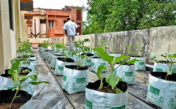 Rooftop vegetable garden opened at district library in for Terrace vegetable garden by harikumar
