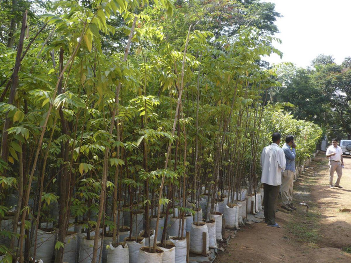 Mangalore S Forest Department Nurseries To Offer Saplings