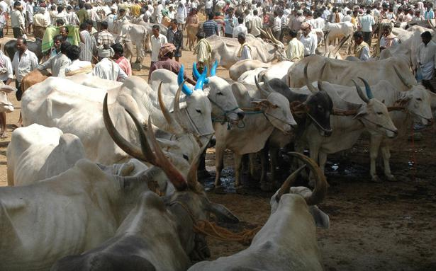 Image result for Ban on sale of cattle for slaughter: Congress walks tightrope