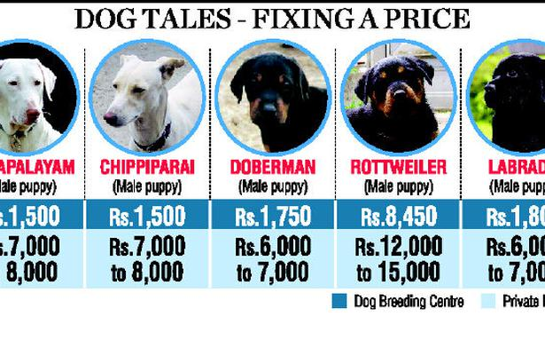 Dog Pets For Sale In Chennai