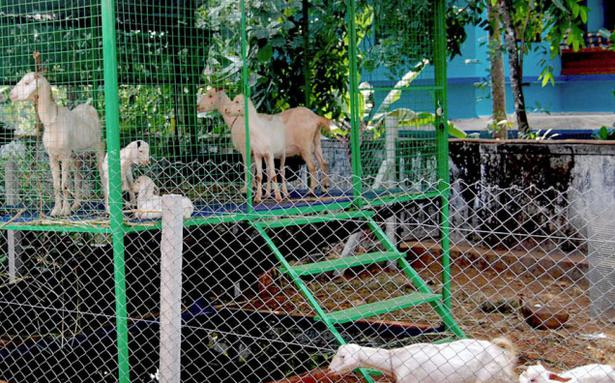 Kvk Develops Durable And Easy To Assemble Goat Shed