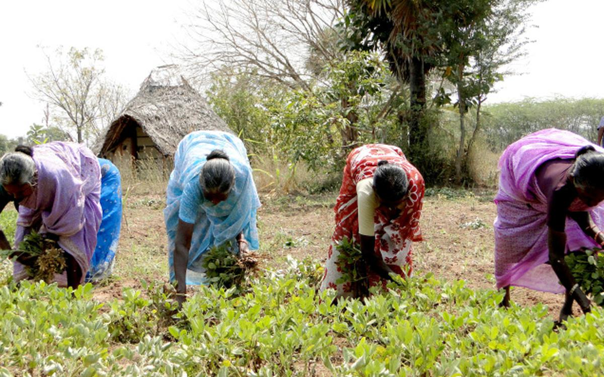 Collective farming comes to the help of destitute and