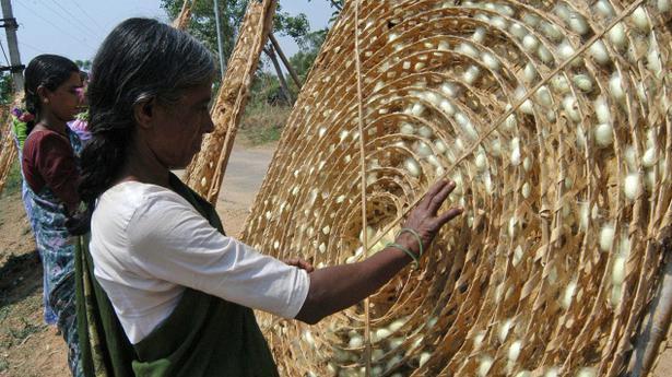 Budget Brings Good Tidings For Sericulture Farmers The Hindu
