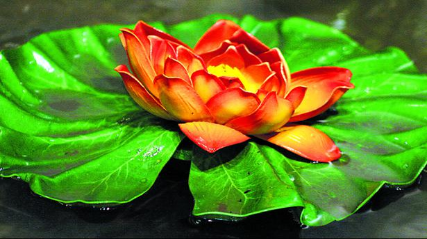 Lotus the national flower of india tamil nadu the hindu mightylinksfo