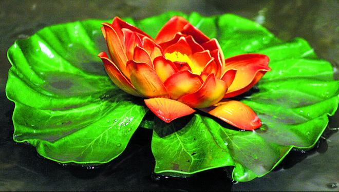 Lotus the national flower of india tamil nadu the hindu lotus the national flower of india mightylinksfo