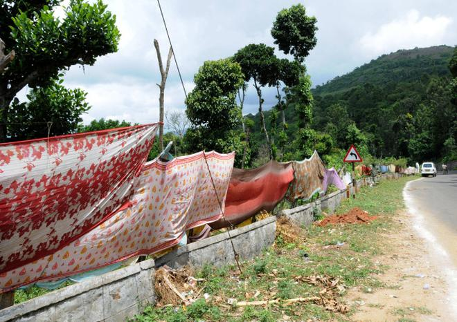 Saris take the place of solar fences to protect crops