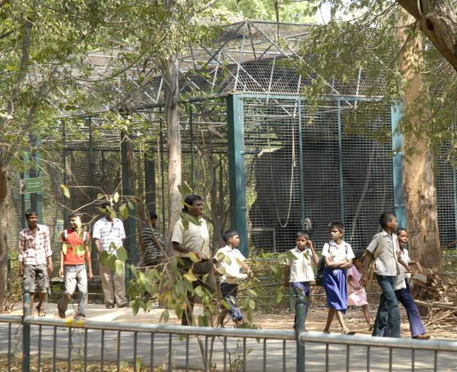 Trip to Vandalur zoo