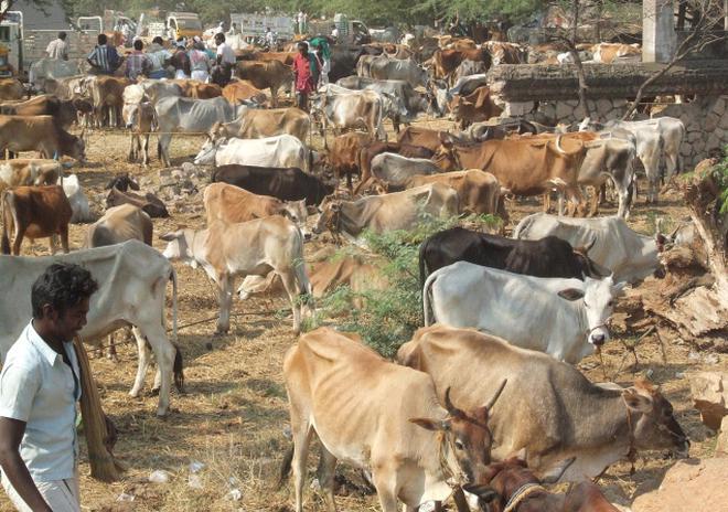 Image result for cattle market in tamilnadu