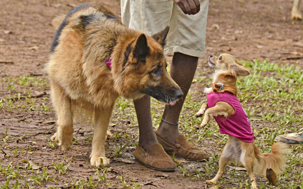 Doggies' day out at Cubbon Park - The Hindu