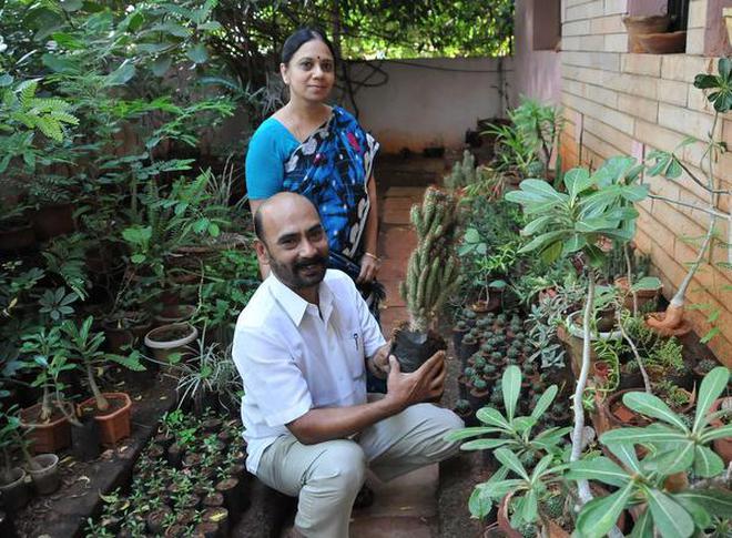 Madurai couple gelango and ekalaimathy on their hobby of raising g elango and e kalaimathy at their bonsai garden photo s solutioingenieria Choice Image