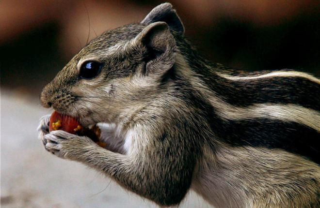 caring for squirrels the hindu
