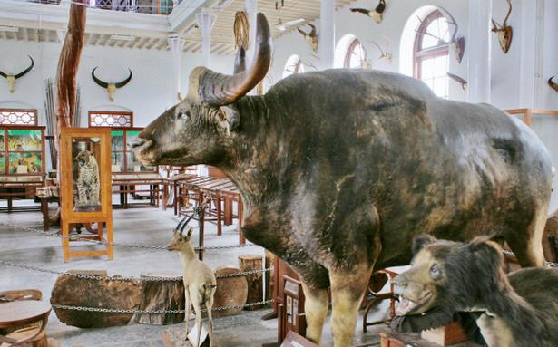 Museums in the city document proud heritage of the region ...