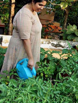 NOVEL VENTURE A Rooftop Garden At Lakshmi Menons House Peramangalam Near Thrissur