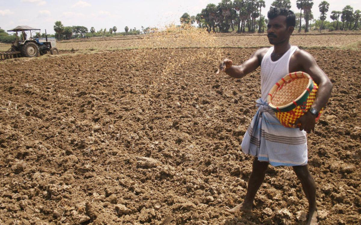 Farmers Busy Sowing Paddy Seeds The Hindu