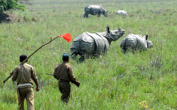 poaching in assam Alarmed by the spurt in rhino poaching incidents, the assam government has handed over investigations to india's federal central bureau of investigation park warden.