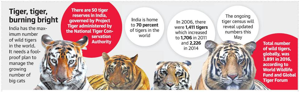 India can't handle more tigers, say experts