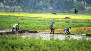 Farming activities begin in lands irrigated by Kalingarayan Canal