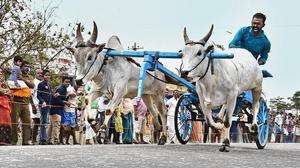Rekla race brings festive mood to Navakkarai