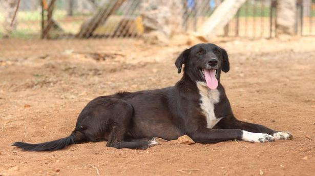 Animals for adoption in Coimbatore