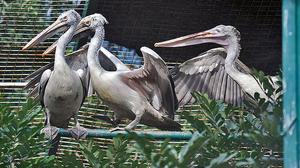 Three species of birds added to Kurumbapatti Zoo