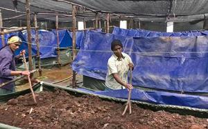 Horticulture Dept. producing vermicompost at Kattery Park