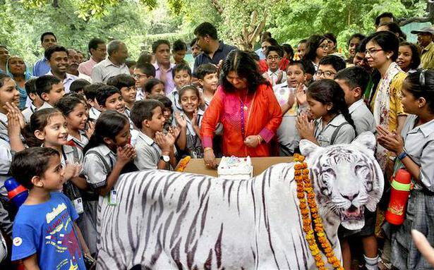 City zoo holds birthday bash as tiger Vijay turns 10