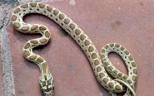 Snake rescued from Assembly premises