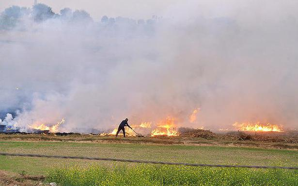 Stubble burning: govt. to spray bio-decomposer in paddy fields