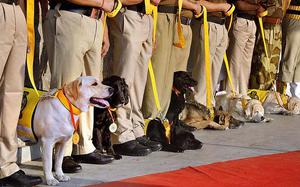 CISF's canine brigade calls it a day